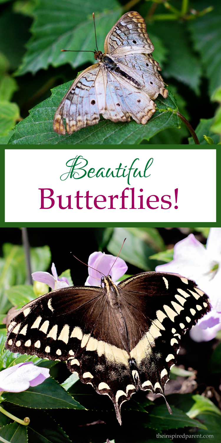 Butterflies at Brookfield Zoo | theinspiredparent.com