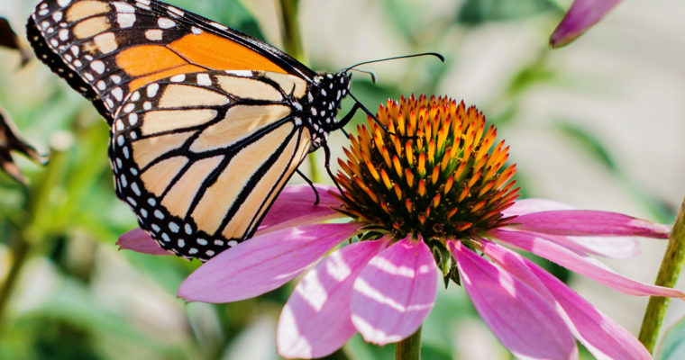 Butterfly Season at Brookfield Zoo